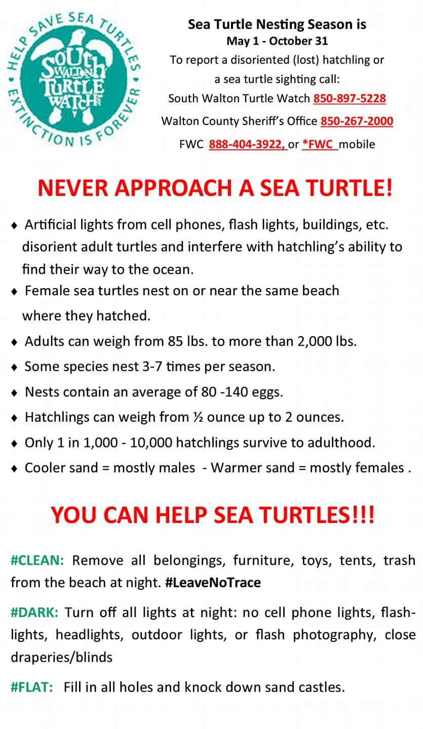 Never Approach a Sea Turtle