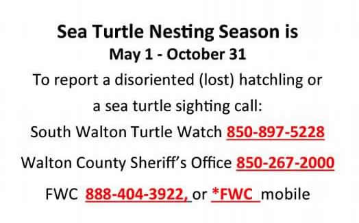 Sea Turtle Sighting Contact Numbers