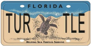 SeaTurtleLicensePlate-Copy